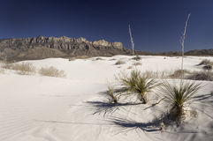 Dune del bacino del sale in Guadalupe Mountains National Park Immagine Stock