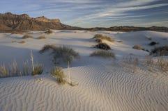 Dune del bacino del sale in Guadalupe Mountains National Park Fotografie Stock Libere da Diritti