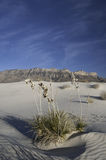 Dune del bacino del sale in Guadalupe Mountains National Park Fotografia Stock Libera da Diritti