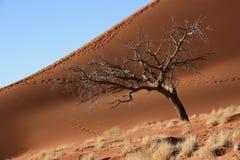 Dune della Namibia Fotografia Stock