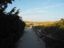 Dune della spiaggia di estate Immagine Stock