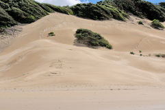 Dune della spiaggia a Londra orientale Sudafrica Fotografia Stock