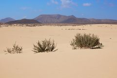 Dune di sabbia fotografia stock libera da diritti