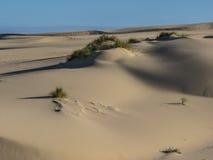 Dune di sabbia Fotografie Stock Libere da Diritti