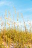 Dune di sabbia con erba Fotografia Stock