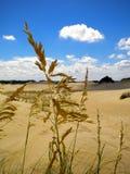 Dune di sabbia con erba gialla nella priorità alta Fotografia Stock