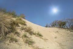 Dune di sabbia con erba verde Fotografia Stock