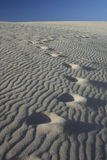 Dune di sabbia con le orme Fotografie Stock Libere da Diritti