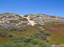 Dune di sabbia con le piante selvatiche fotografie stock