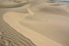 Dune di sabbia dei maspalomas Immagini Stock Libere da Diritti