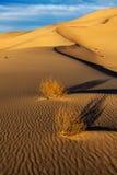 Dune di sabbia della valle di Eureka Death Valley Immagine Stock