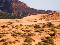 Dune di sabbia dentellare di corallo Immagine Stock
