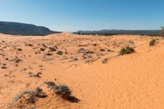 Dune di sabbia dentellare di corallo Immagini Stock