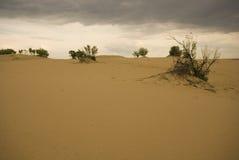 Dune di sabbia di Saskatchewan Fotografie Stock