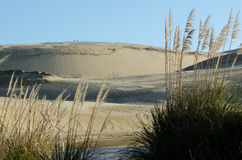 Dune di sabbia di Te Paki fotografie stock
