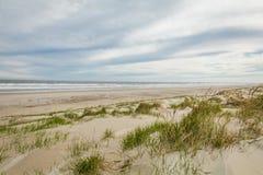 Dune di sabbia di Diamond Beach in primavera, cresta di foresta vergine, NJ immagine stock