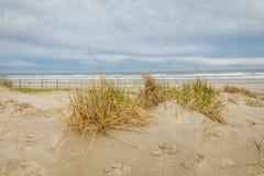 Dune di sabbia di Diamond Beach in primavera, cresta di foresta vergine, NJ fotografie stock