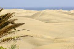Dune di sabbia e della palma Immagine Stock