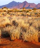 Dune di sabbia namibiane Immagini Stock