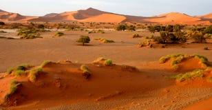 Dune di sabbia namibiane Immagine Stock