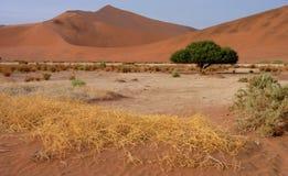 Dune di sabbia namibiane Fotografia Stock