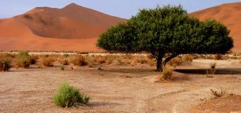 Dune di sabbia namibiane Fotografie Stock