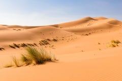Dune di sabbia Ouzina, deserto di Shara, Marocco Immagini Stock