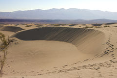 Dune di sabbia piane del Mesquite fotografia stock libera da diritti