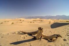 Dune di sabbia piane del Mesquite immagini stock
