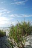 Dune di sabbia verticali della spiaggia Fotografia Stock Libera da Diritti