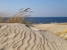 Dune dorate Immagini Stock