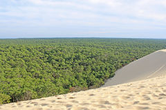 Dune du Pilat, France. Forest from the dune de pyla Royalty Free Stock Images