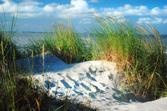 Dune and dune grass. At the sea Stock Photos