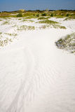 Dune ed avena del mare Immagine Stock Libera da Diritti
