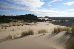 Dune ed erba 3 Immagini Stock