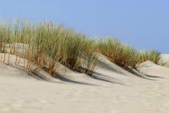 Dune et végétation en France Photographie stock