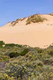 Dune, Flowers and vegetation in the beach in Almograve Stock Photo