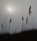 Dune, fog and sun. Fog sun dune grass beach rays silhouette Royalty Free Stock Photos