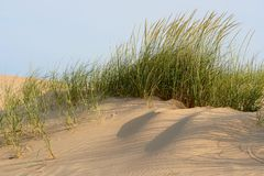 Free Dune Grass Royalty Free Stock Image - 1199886