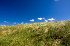 Dune grass Stock Photos