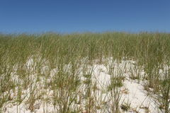 Dune with grass Stock Photo