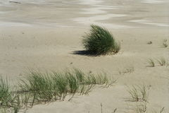 Dune with grass Stock Image