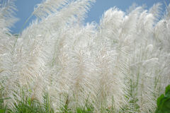 Dune grass Stock Photography