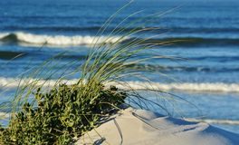 Dune grass Stock Photography