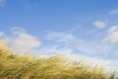 Dune grass Stock Photos