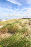 Dune grass Royalty Free Stock Photography