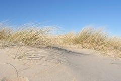 Dune Grass Stock Image