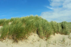 Dune grass. Sand dunes and grass; Newport, Oregon Royalty Free Stock Images