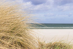 Dune grass on the Baltic Sea Stock Photo