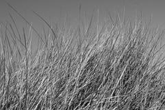 Dune grass at beach Germany Royalty Free Stock Photos